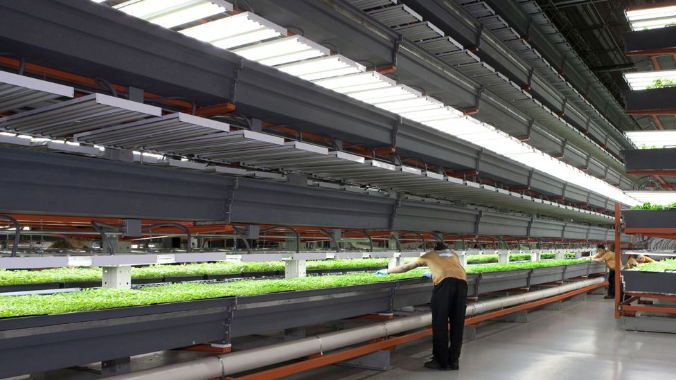 Illinois' FarmedHere grows crops within a city warehouse – and uses aeroponics to grow plants using a mist of nutrient-rich water instead of soil. (Copyright: FarmedHere)