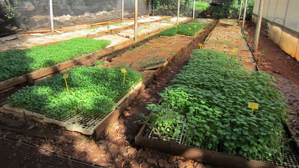 In Cuba, food shortages created 'organoponicos' - growing food for city dwellers in spare plots. Other cities could adopt the idea. (Copyright: Science Photo Library)