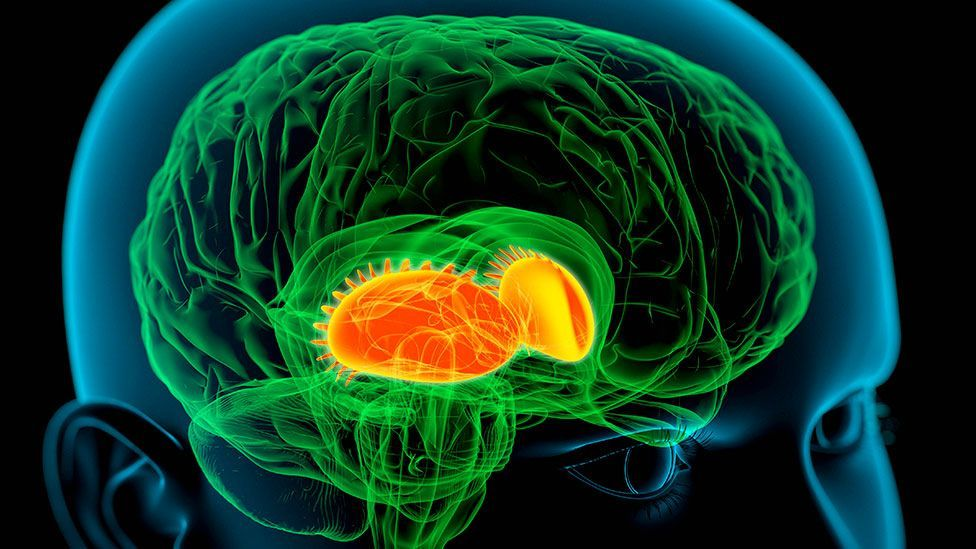 How our brains process rewards could be a factor (Copyright: Science Photo Library)