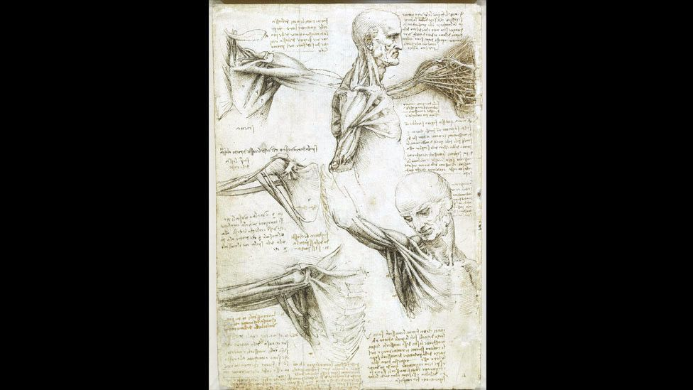 The great polymath brought together superb draughtsmanship, scientific knowledge and an artist's sensibility in his anatomical drawings. (Royal Collection)