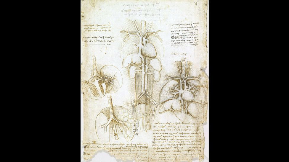 Leonardo's work in diverse fields led him to draw comparisons between them. He saw links between the soil and flesh, rivers and blood vessels. (Corbis)