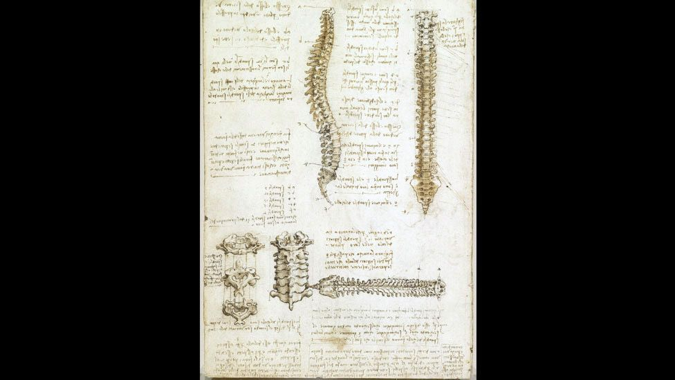 The work now known as the Anatomical Manuscript A contains some amazing insights, like the first accurate depiction of the human backbone. (Royal Collection)
