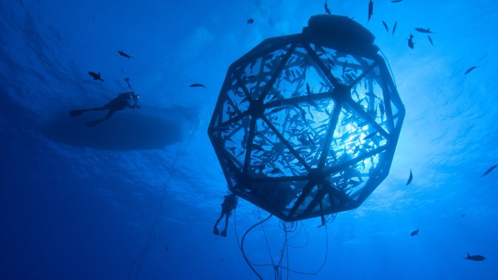 Hawaii-based Kampachi Farms have created a fish cage that can be towed and flushed clean by ocean currents, cutting down on pollution. (Rick Decker)