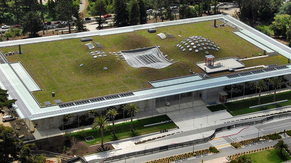 The California Academy of Sciences' Living Roof provides habitat for wildlife, functions as a cooling system for the building and also help prevents storm water runoff. (Tom Fox)