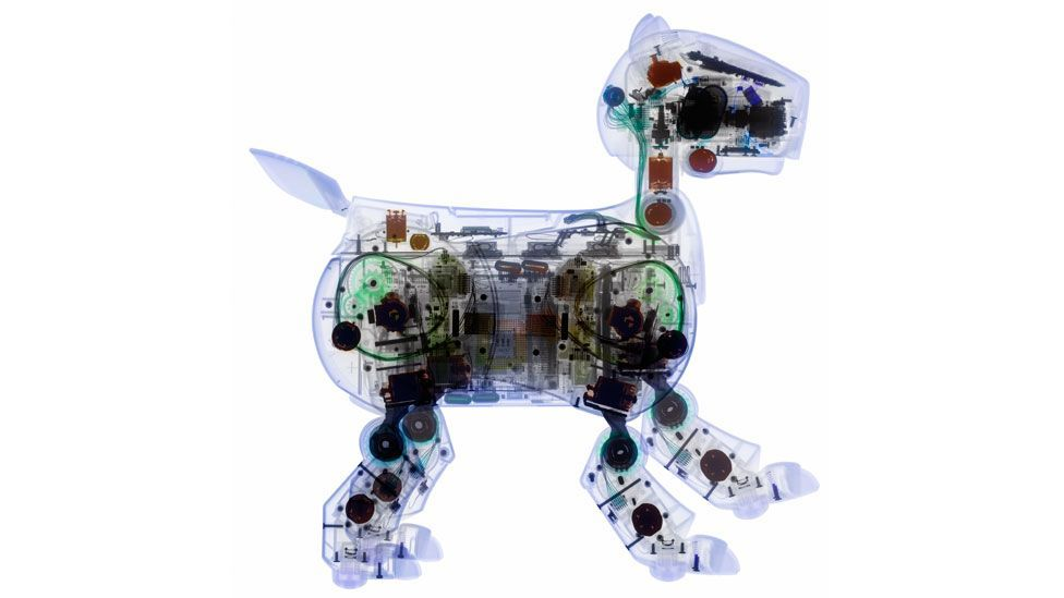 Some owners of Sony's AIBO dogs treat it as a real animal, and a few even remove the robot from the room when changing clothes. (Science Photo Library)