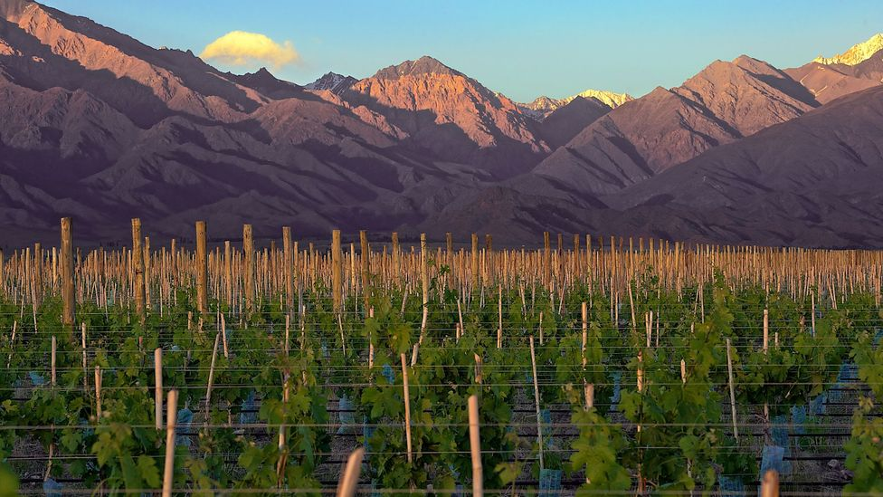 At the Argentinian wine-growing co-operative, Vines of Mendoza, owners get three to 10 acres of the vine of their choice. (Michael Evans)