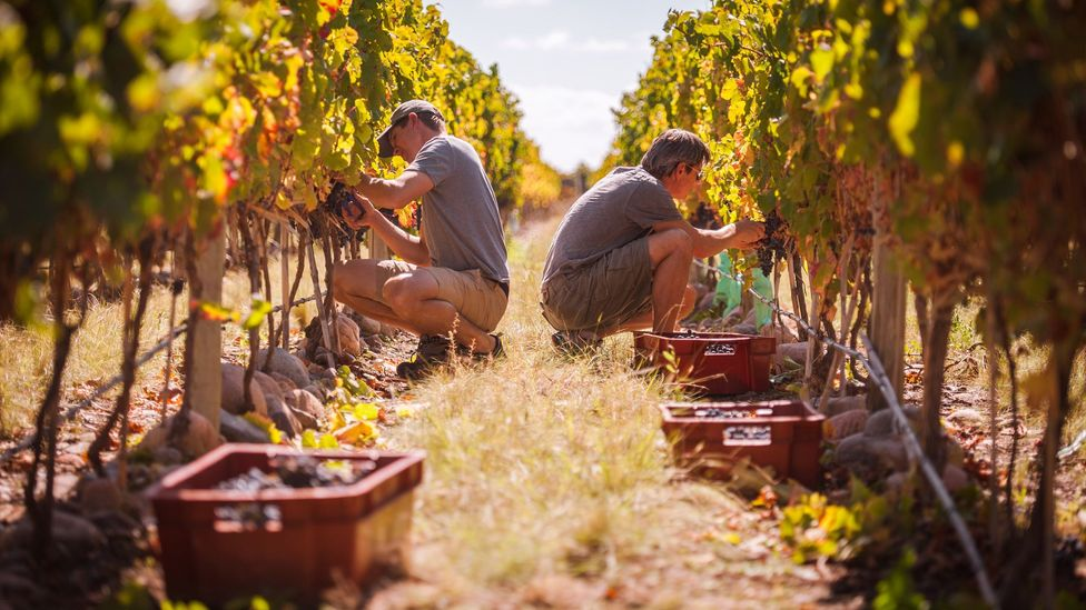 The 250 days a year of sunshine help create ideal grape-growing conditions at Vines of Mendoza. (Michael Evans)