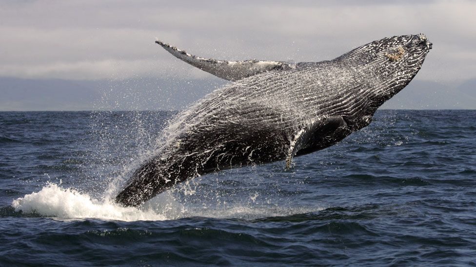 Why whale poo is good for the ocean... and us (Thinkstock)