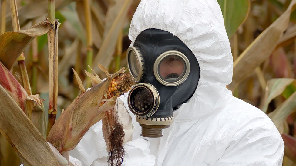 The radiation at Chernobyl can still kill many living things, but resistant organisms thrive – even in containers of radioactive waste. (Thinkstock)
