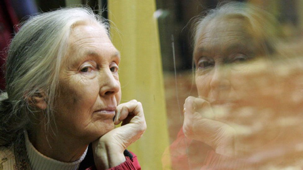 Goodall faced condescension and controversy when she announced her initial findings (Getty Images)
