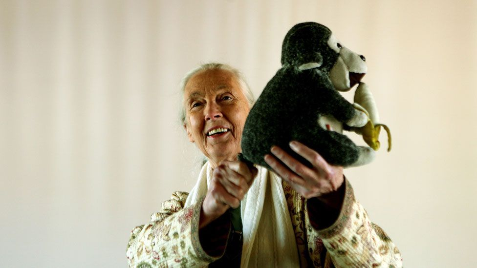 """Goodall with her stuffed toy """"Mr H"""" (Getty Images)"""