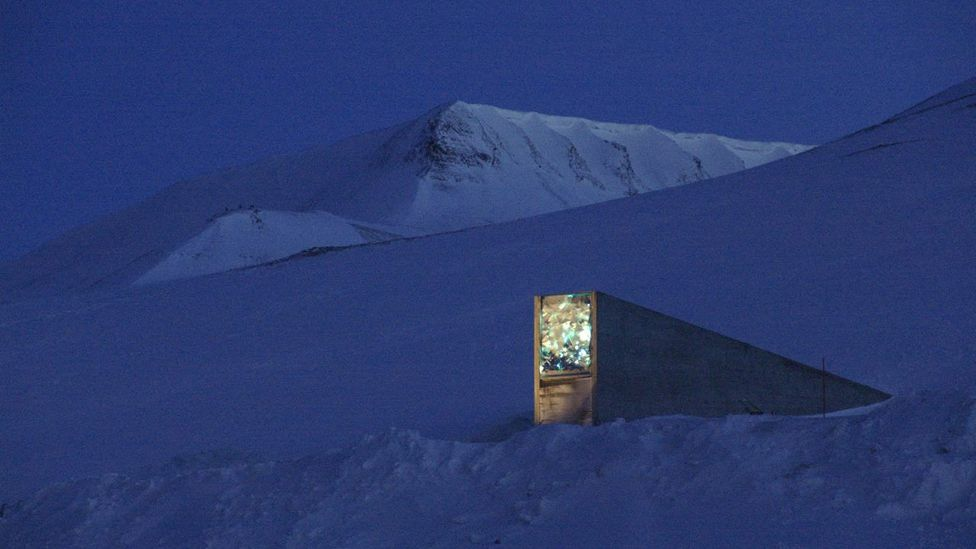In case of disaster, around 825,000 crop plants are stored as seeds in the Svalbard Global Seed Vault (Mari Tefre/Svalbard Globale Seed Vault)