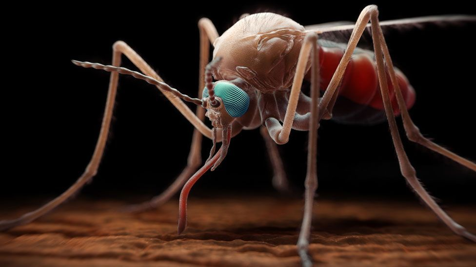 Malaria-carrying mosquitoes are a killer in Africa - but some people have a different disease that gives them protection (SPL)