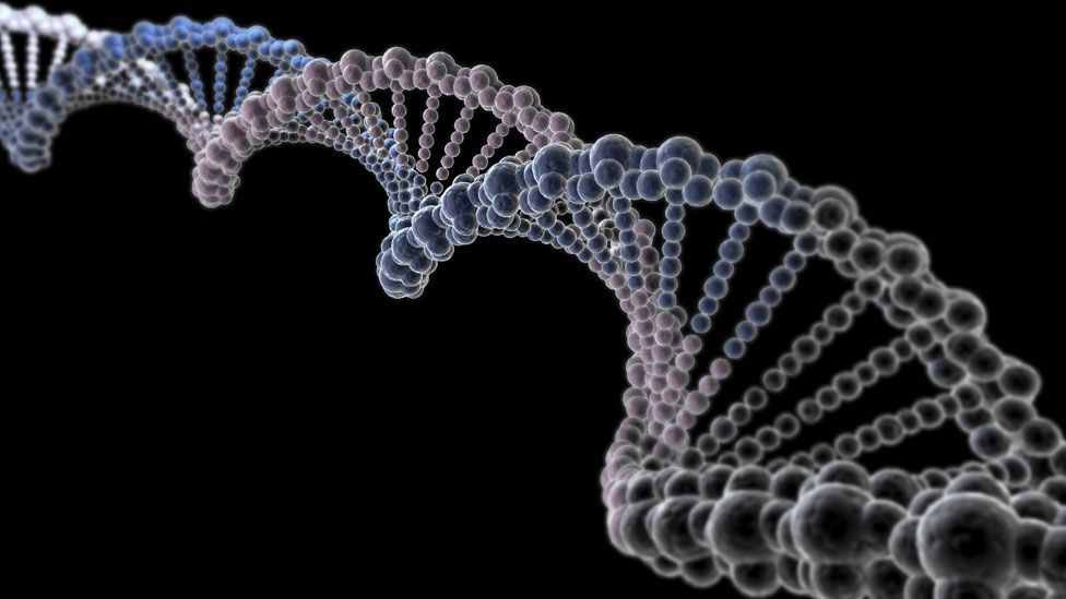 Our DNA mechanics become less effective with age (SPL)