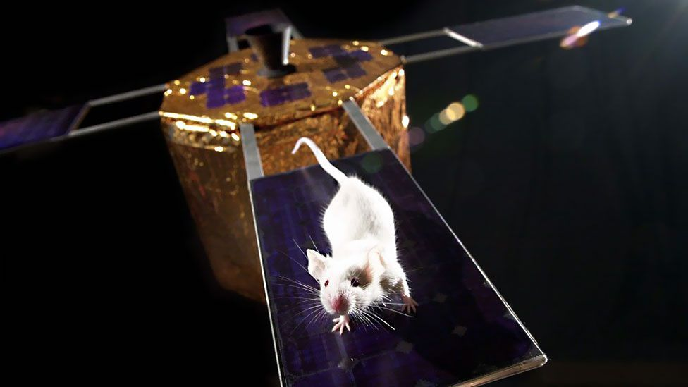 Experiments on whether mouse sperm can survive the rigours of space are due to be carried out on the ISS (Nasa)