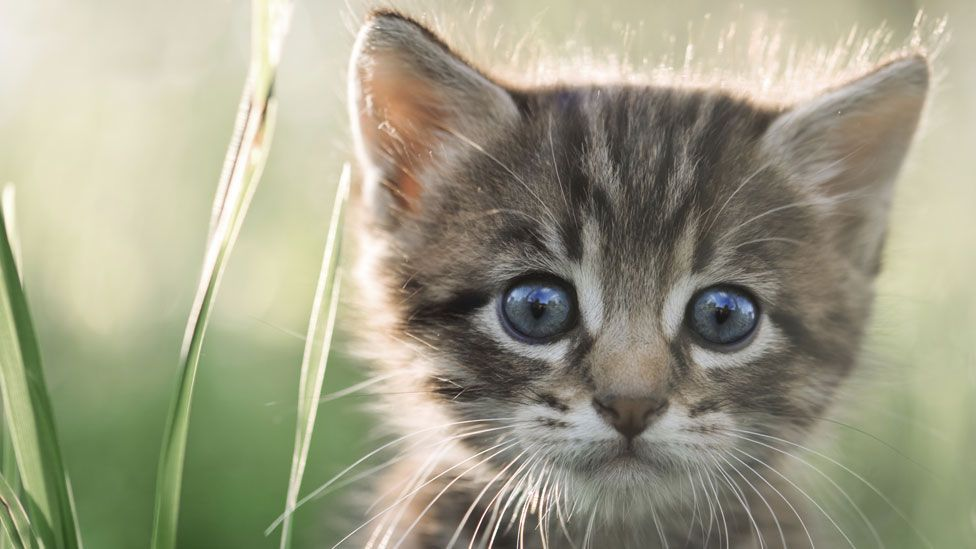 """How does this kitten make you feel? The Cherokee language has a unique word for it: """"oo-kah-huh-sdee"""" (Thinkstock)"""