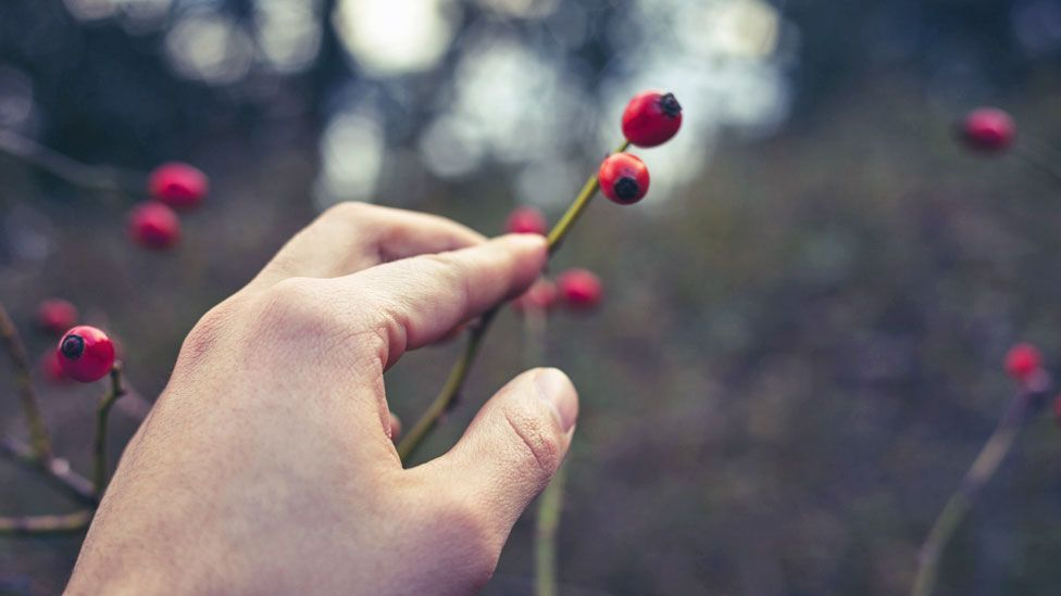 Languages can contain vital knowledge -  the names of berries can convey whether they're poisonous, for example (Thinkstock)