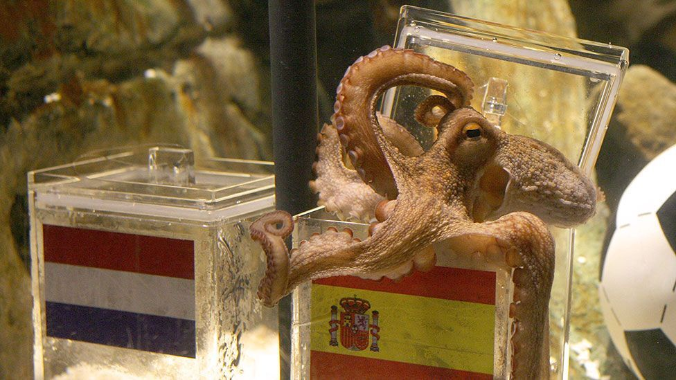 Who could forget Paul the octopus and his ability to predict the winners in the 2010 World Cup? (Getty Images)