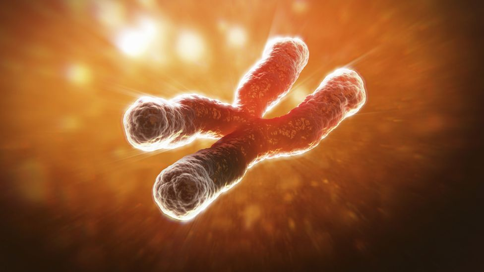 Telomeres help protect the ends of our chromosomes, but they shorten each time a cell is divided (Science Photo Library)