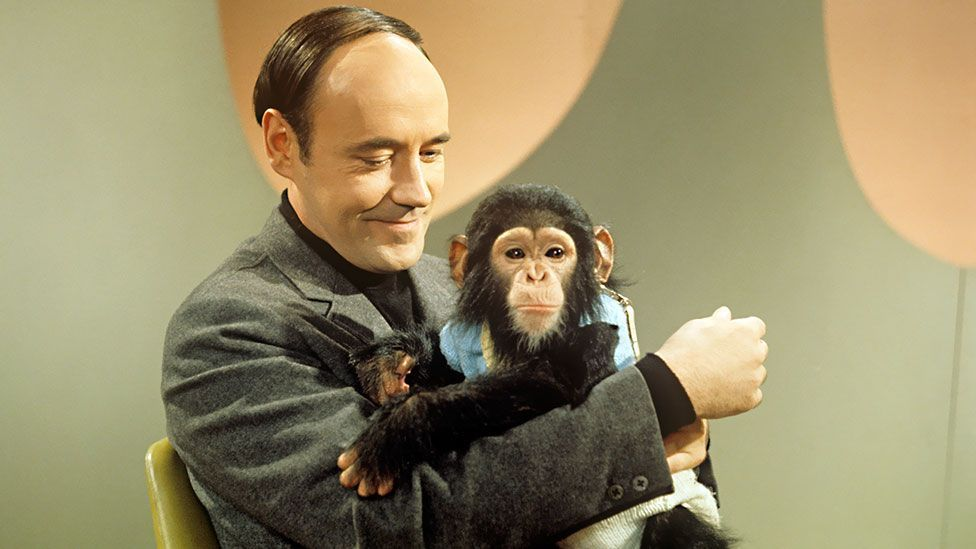 Desmond Morris and Congo (BBC)