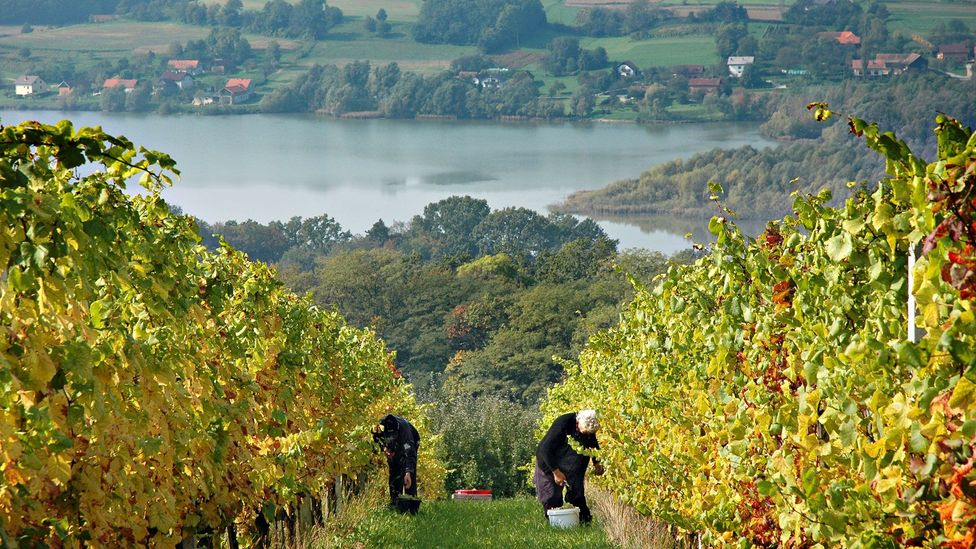 Passing vineyards in Slovenia