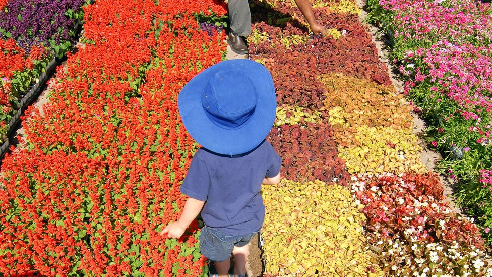 A child plays among Eastern Market's flower beds. (Paul Warner/Getty)