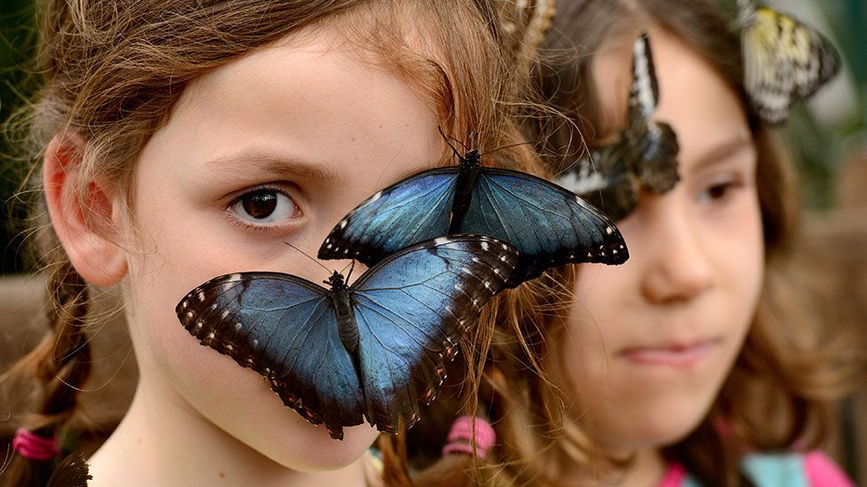 Children interact with butterflies at the Natural History Museum, London (Jonathan Hordle/REX)