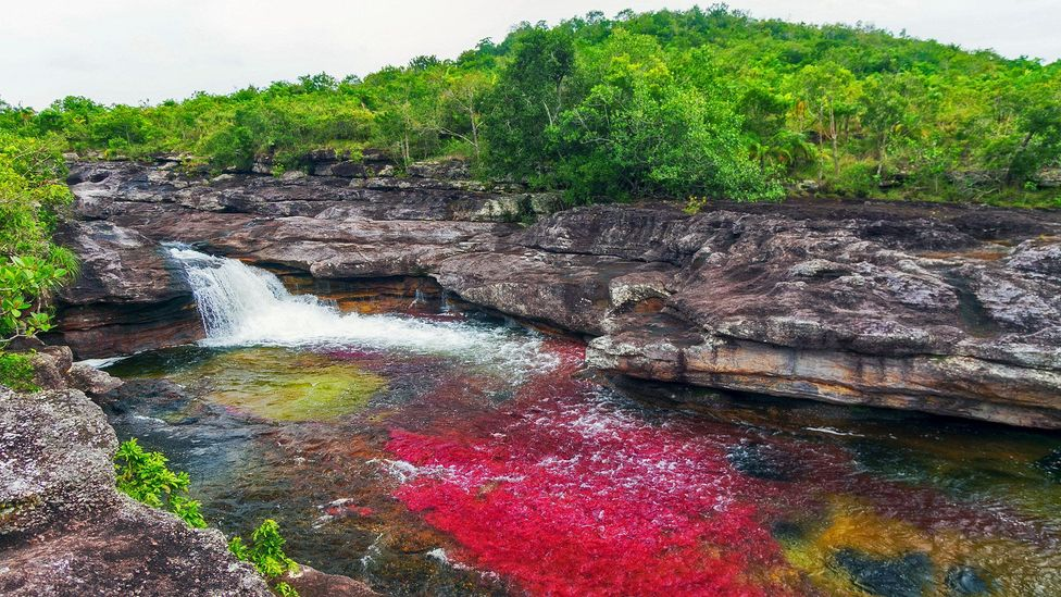 Caño Cristales, Colombia, Piscina Carol, liquid rainbow