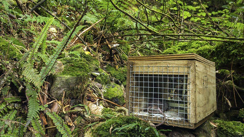 Pest control in New Zealand (Thinkstock)