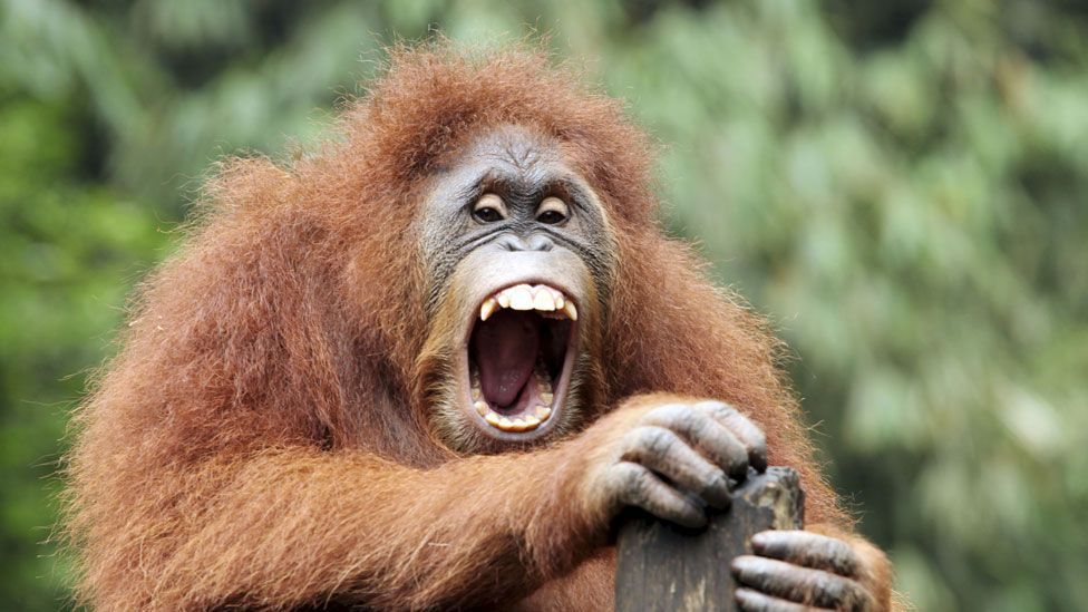 Other primates with bare faces tend to have vision like ours (Thinkstock)
