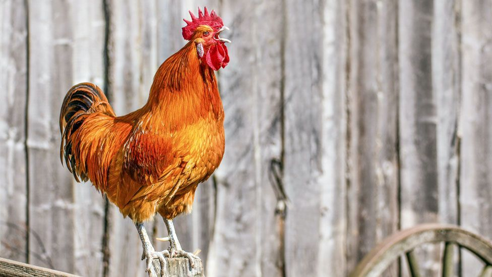 There are reasons why the early bird catches the worm. (Thinkstock)