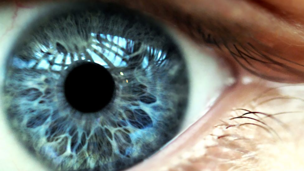 Forward-facing eyes allowed our ancestors to see through the dense leaves and branches in their forest habitat (Getty)