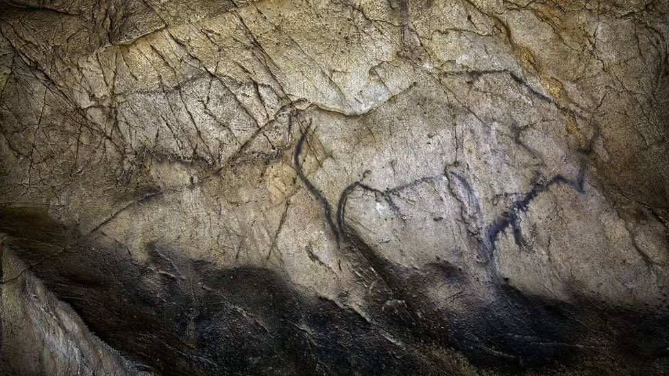 Paintings of bison in El Castillo. (S.RECD/Government of Cantabria)