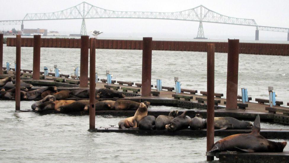 Local residents of Astoria, East Mooring Basin docks. (Credit: David G Allan)