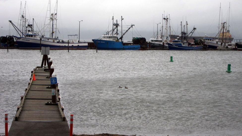 Fishing boats, East Mooring Basin docks. (Credit: David G Allan)