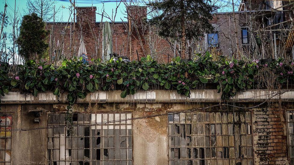 An enchanting rooftop garden on Jurišićeva street. (Credit: Sanjin Kastelan)