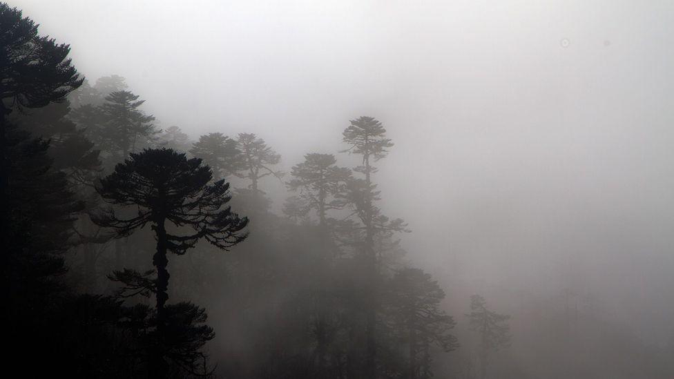 Nepal, hiking trails, trekking, teahouses, villages, forests, vistas