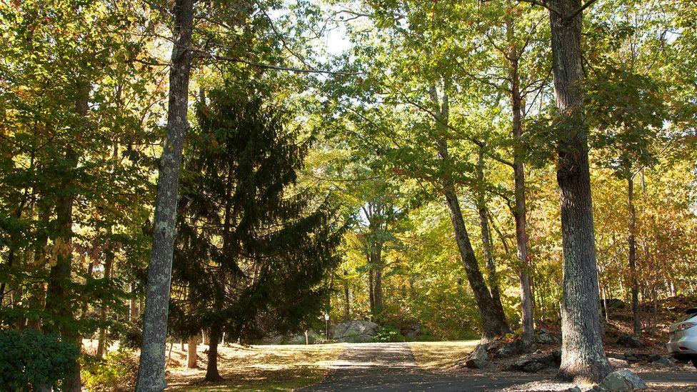 Trail-crossed forests (Credit: Amanda Ruggeri)