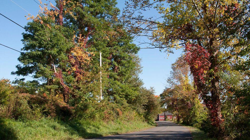 Old Tophet Road (Credit: Amanda Ruggeri)