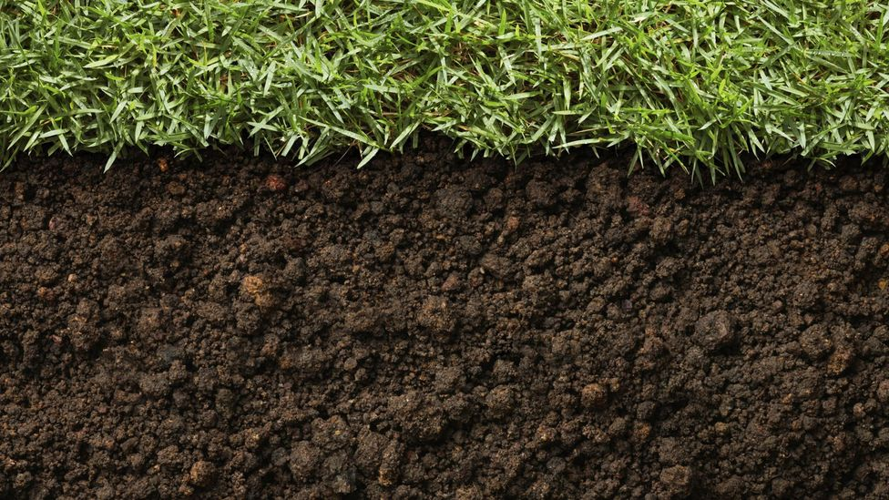 A dead body's minerals continue to leach into soil months after death (Credit: Getty Images)