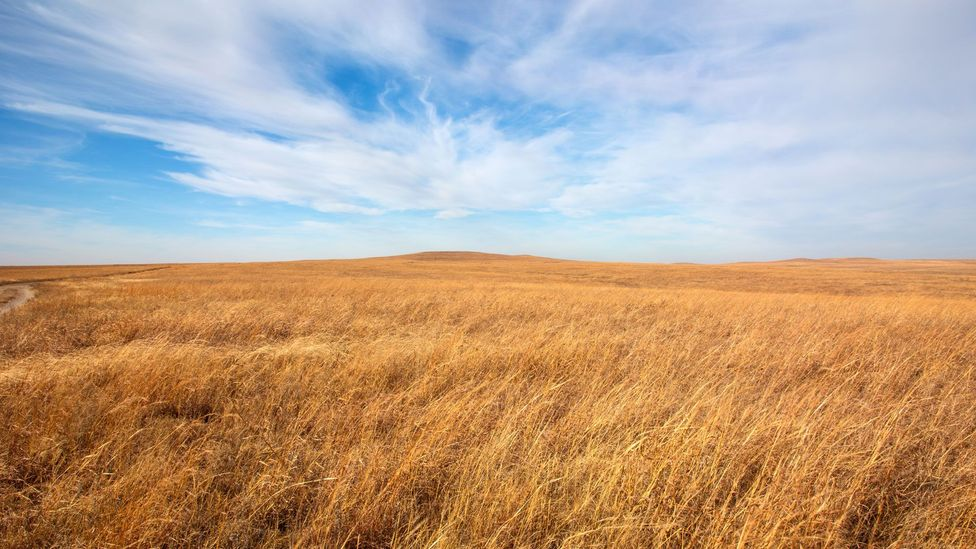 A new landscape, new animals and new people influenced American English. Words such as prairie came from French, while pretzel came from German (Credit: Thinkstock)