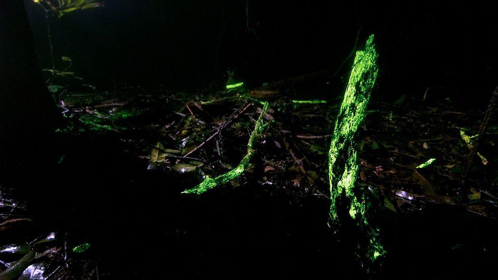 The jungle aglow (Credit: Sriharsha Ganjam & Ashwini Kumar Bhat - Landscape Wizards)