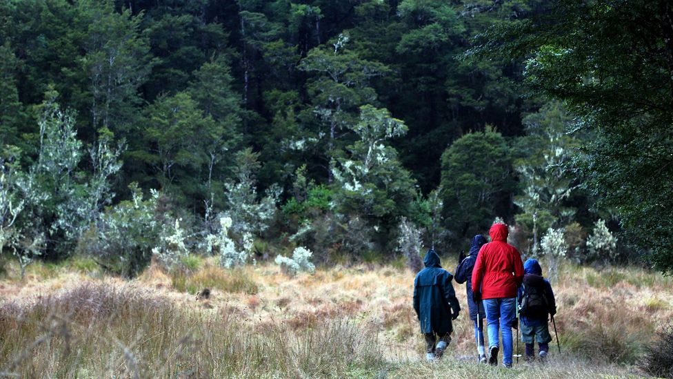 Walkers pass through cathedrals of native bush (Credit: Naomi Arnold)