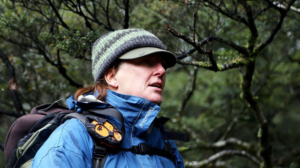 Explaining the beech forest (Credit: Naomi Arnold)