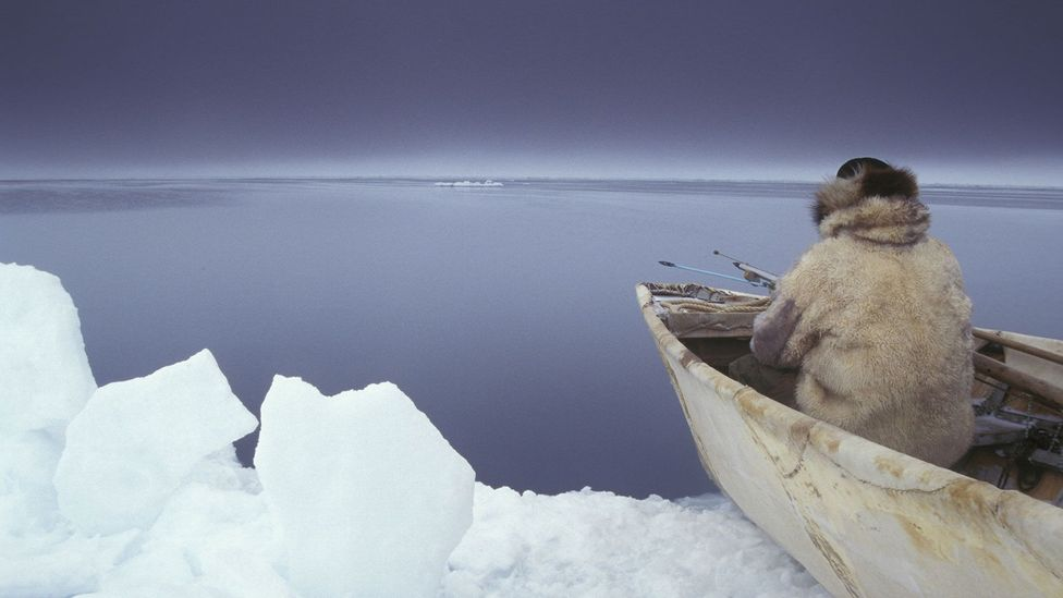 Inuit hunters have long known that bowhead whales outlive almost every other creature (Credit: Getty Images)