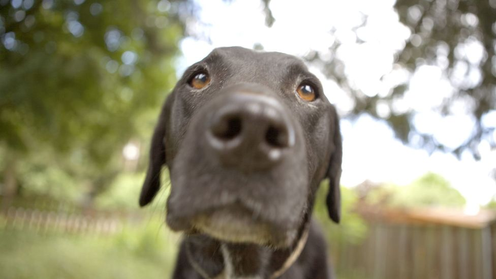 Living with a dog could help give your immune system a boost (Credit: Getty Images)