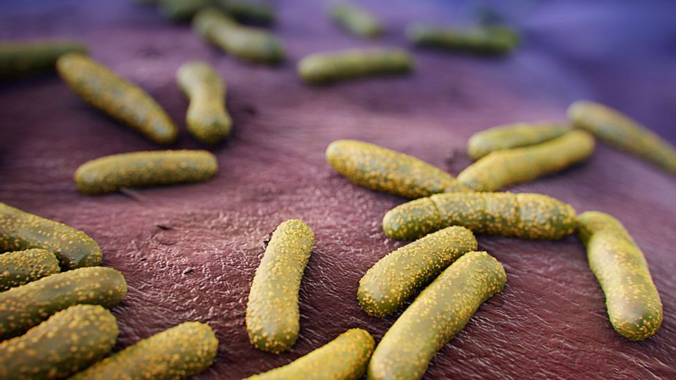 Some of the helpful bacteria on our skin helps protect us from more harmful bugs (Credit: Science Photo Library)