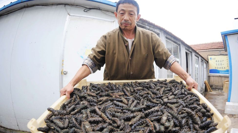 Sea cucumbers - to Asian diners, it's all about the mouthfeel (Credit: Getty Images)
