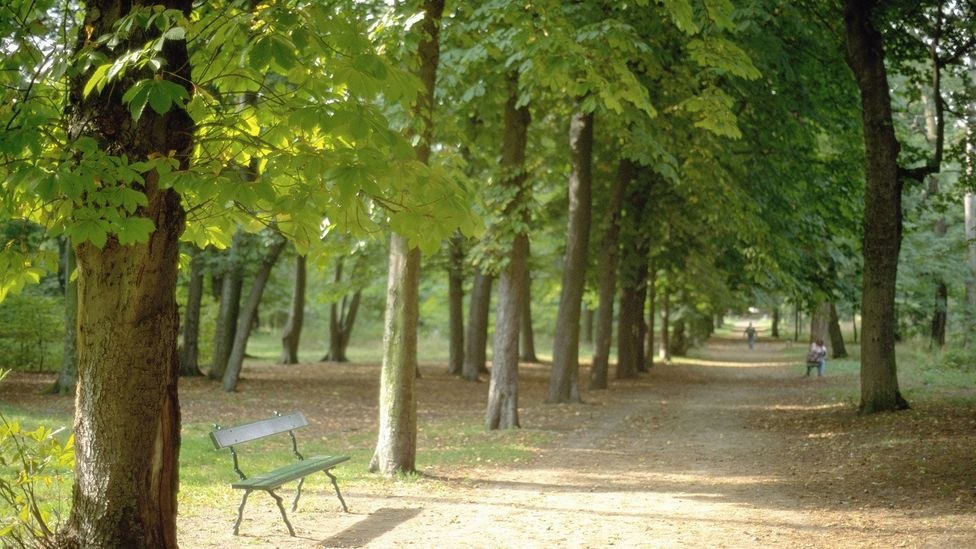 Haussmann engineered grand squares, a sewage system and city parks like the Bois de Boulogne (Credit: Age fotostock / Alamy Stock Photo)