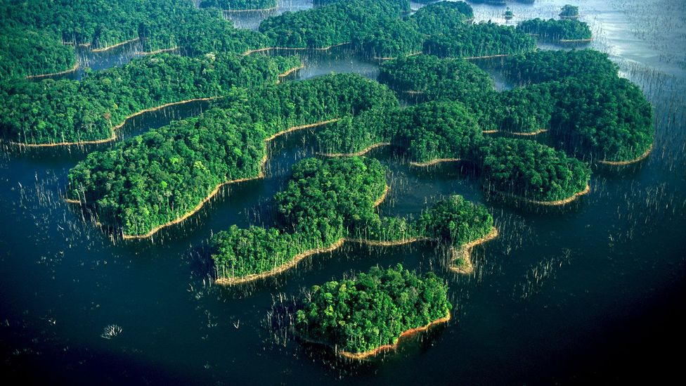Guyana and French Guyana hold the most untouched tropical forests in the world (Credit: Getty Images)